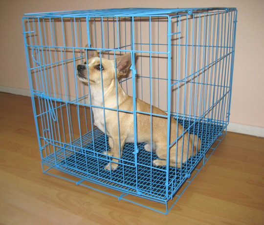 Blue Wire Dog Cage/Crate