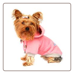 Designer Dog Sweat Shirt