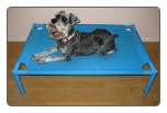 Designer Portable Elevated Dog Bed