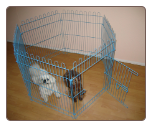 Exercise Dog Pen (Colored)