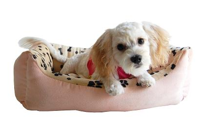 Extra soft plush small dog bolster bed
