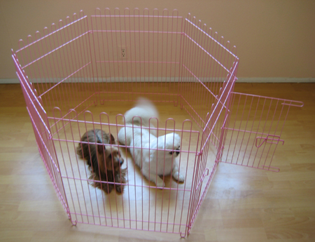 Pink exercise dog pen