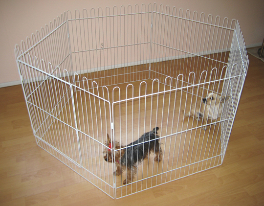 White exercise dog pen